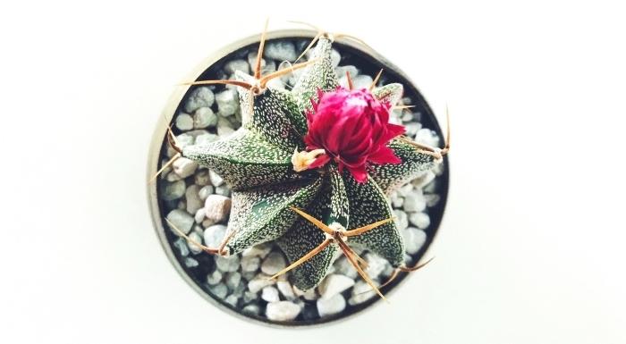 mini terrarium comme une idée cadeau fête des mères a fabriquer, pot à fleur vert avec cailloux et plante verte