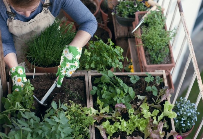 soins pour plantes comestibles à cultiver sur le balcon, semer et planter légumes dans terreau spécial en ville