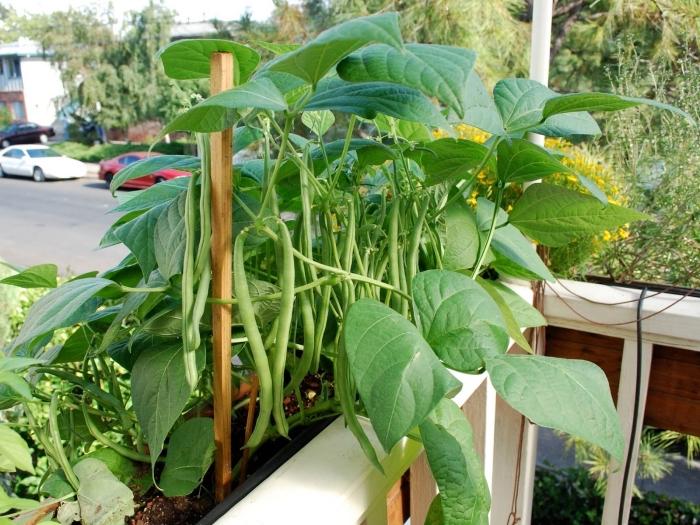 cultivation légumes sur le balcon, idées quelles plantes choisir pour transformer son balcon en mini potager urbain