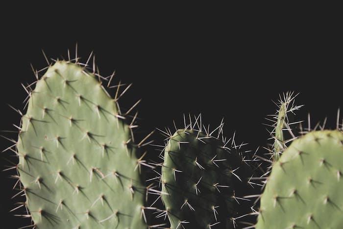 Fond d'écran verrouillage ordinateur cactus wallpaper fond d'écran swag cool image artistique photo macro
