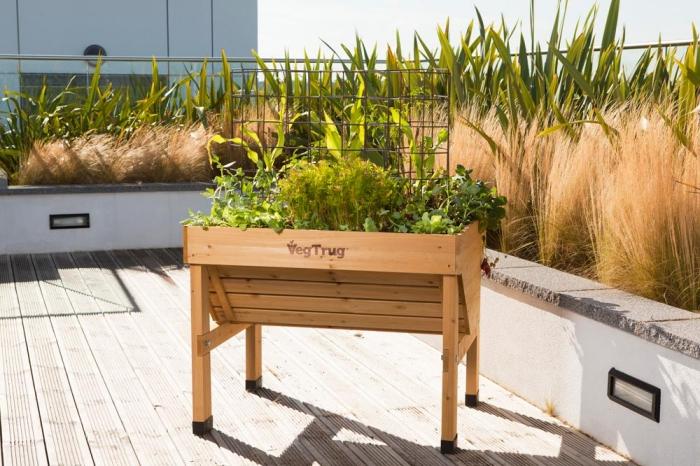 comment cultiver des légumes et plantes aromatiques dans un potager surélevé de bois clair avec treillis de fer