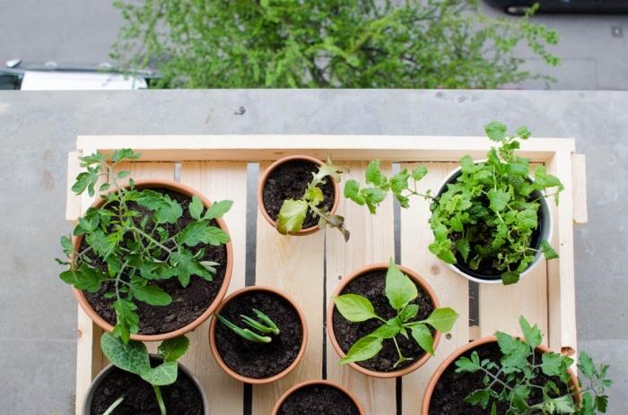 modèle de potager terrasse avec jardinière en bois et pots de terre cuite remplis de terreau spécial pour salades oignons et tomates