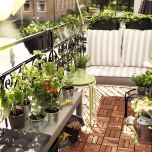 Potager balcon ou terrasse - solution idéale pour cultiver son mini jardin en ville