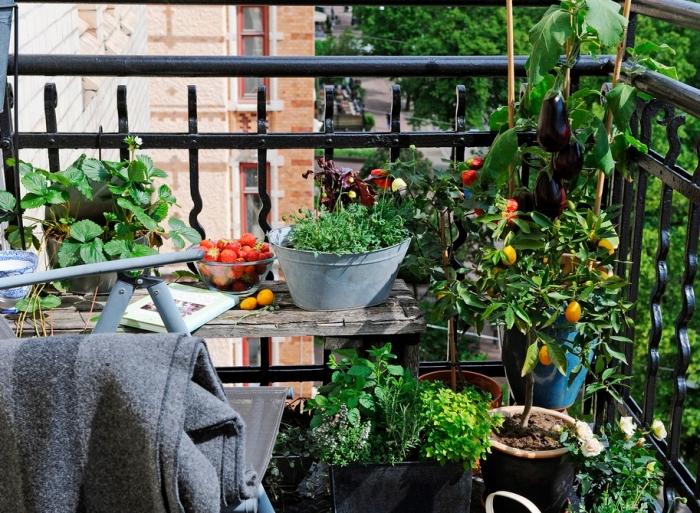coin de mini jardin urbain sur le balcon avec petite table de bois massif et plantes comestibles dans pots