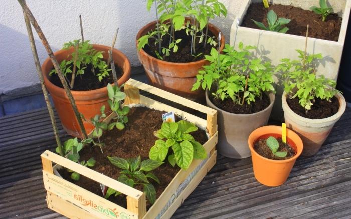 comment faire un potager en ville avec pots et jardinières remplis de terreau spécial légumes ou aromatiques
