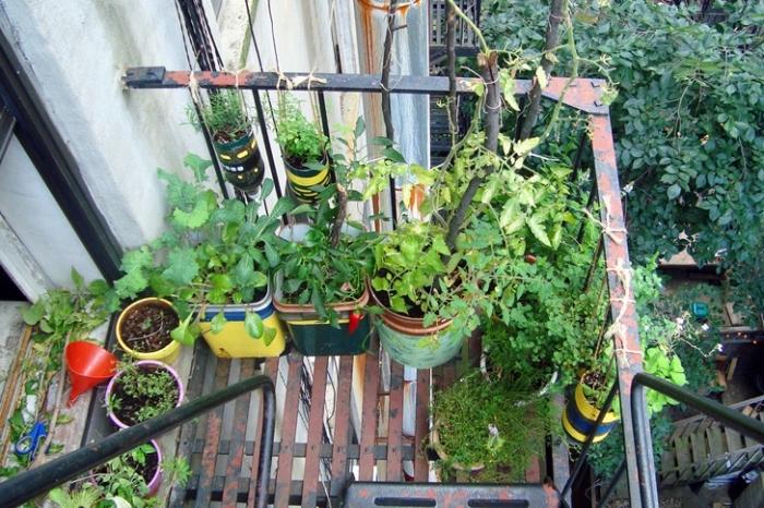 jardinage urbain sur le balcon ou l'escalier en secours avec plantes comestibles et aromatiques cultivés en pots