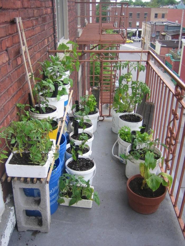 créer un potager sur le balcon avec rangement horizontale de légumes en pots, comment cultiver tomates cerises en appartement