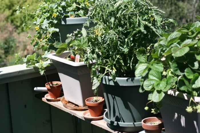 exemple de mini potager aménagé sur le balcon avec pots de différentes tailles, cultivation plantes comestibles en ville