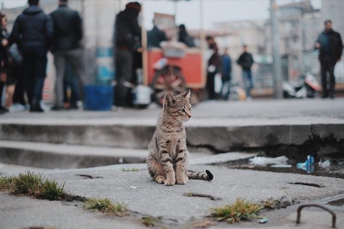 Cool idée fond d'écran gratuit fond d'écran verrouillage visuelle representation tumblr image chat sur la rue