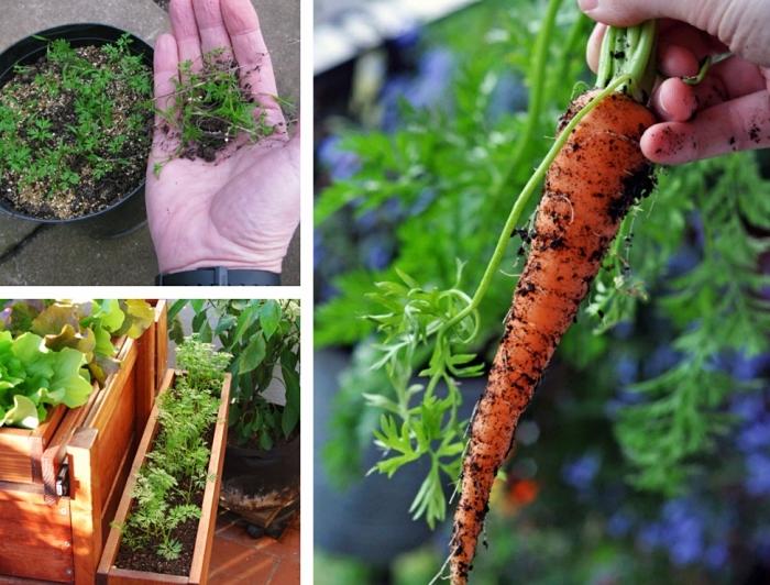 exemple de potager surélevé pour cultiver légumes et herbes sur la terrasse, étapes pour semer carottes en pots