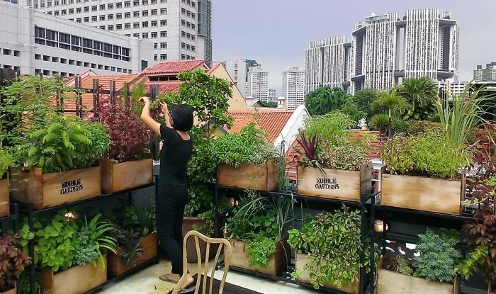 exemple comment transformer une terrasse en mini jardin urbain avec carré potager sur pied ou potager vertical