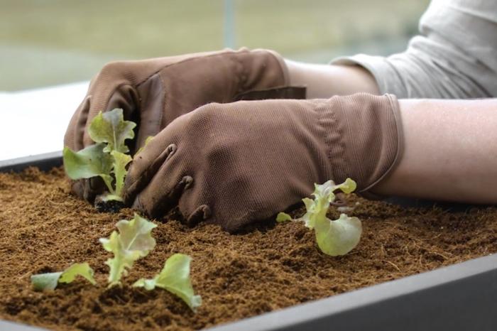 soins pour les plantes cultivées dans pots avec terreau spécial, planter des petites salades dans une jardinière sur le balcon