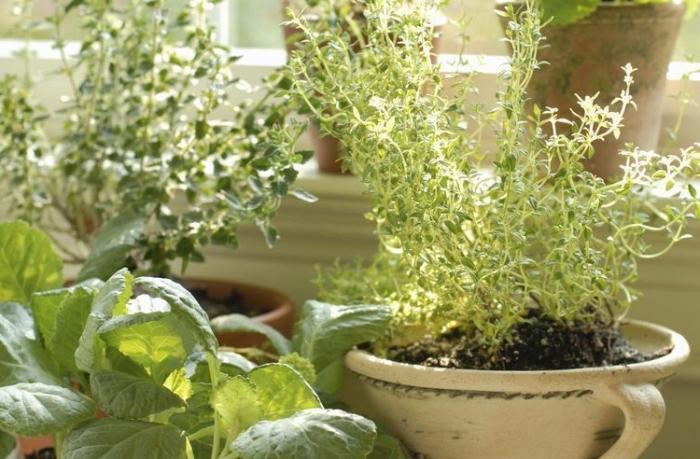 transformation de balcon fermé en mini potager avec cultivation de légumes ou herbes aromatiques en pots