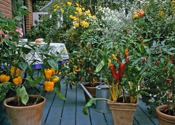 idée comment faire un mini potager terrasse ou balcon avec légumes cultivés dans pots en terre cuite