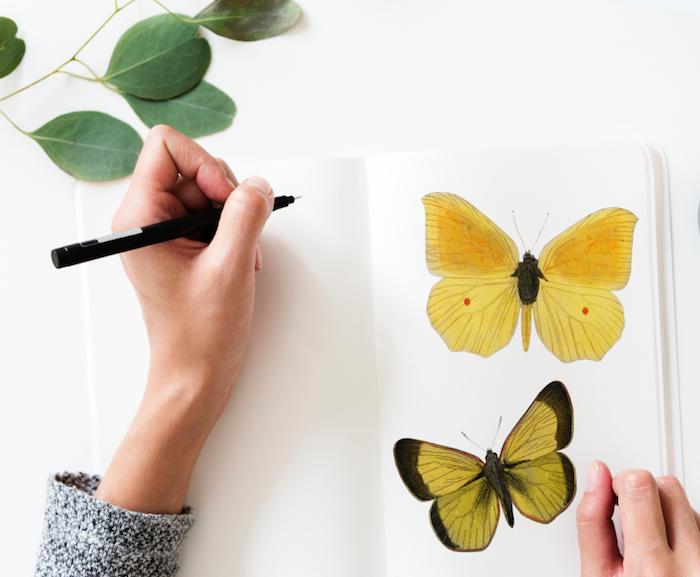 Magnifique idée fond d'écran swag wallpaper fond d'écran fond d'écran paysage cool image papillon