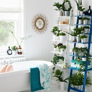 Plante pour salle de bain - laquelle choisir?