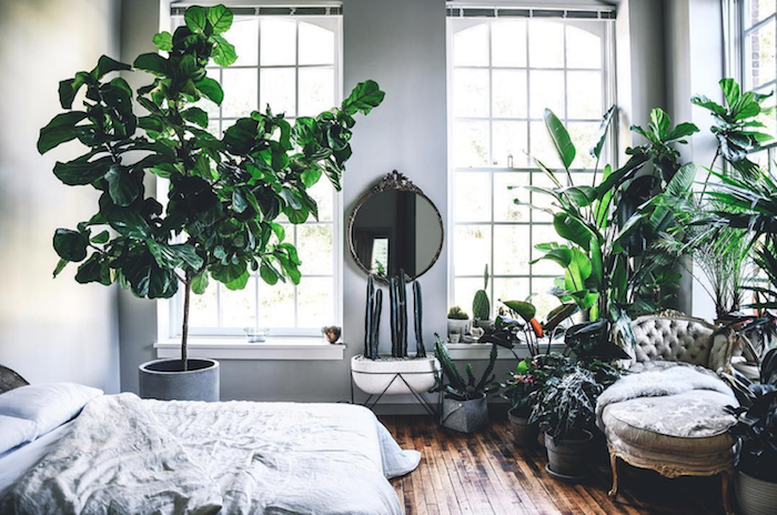 Décoration appartement étudiant décoration d intérieur design d appartement moderne plantes vertes chambre à coucher nature