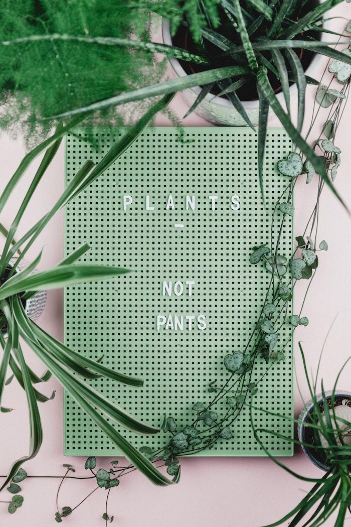 Cool idee cadeau pendaison de crémaillère idée cadeau crémaillère plante verte et tableau pour les amis des plantes