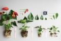 Plante pour salle de bain – laquelle choisir?