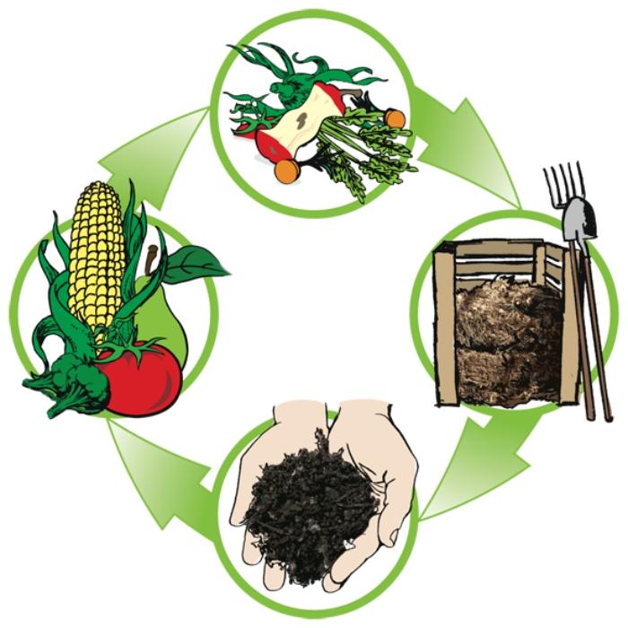 les produits et les phases du cycle de compostage sous la forme d'une illustration digitale, tout savoir sur le compost
