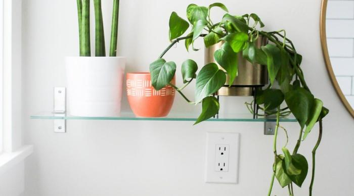 trois plantes vertes sur une étagère en verre, trois pots différents en blanc, en orange et e métal couleur or, murs blancs, salle de bain verte, plante pour salle de bain