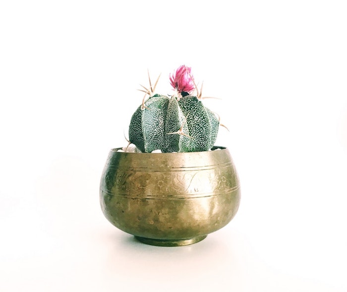 Magnifiue cadeau pour crémaillère idée cadeau crémaillère originale idée pot de fleur doré et cactus