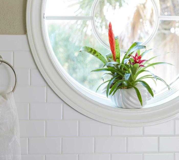 plante interieur ombre, salle de bain verte, espèce exotique avec fleur et feuille rouge, petite fenêtre ronde classique, carrelage en briques blanches