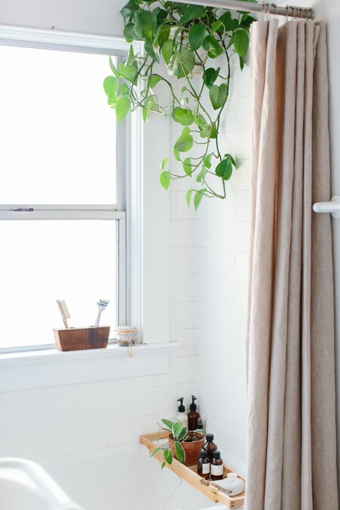plante tombante, plante salle de bain, baignoire et douche avec rideau en couleur rose poudré, fenêtre au cadre métallique blanc, carrelage mur en briques blanches
