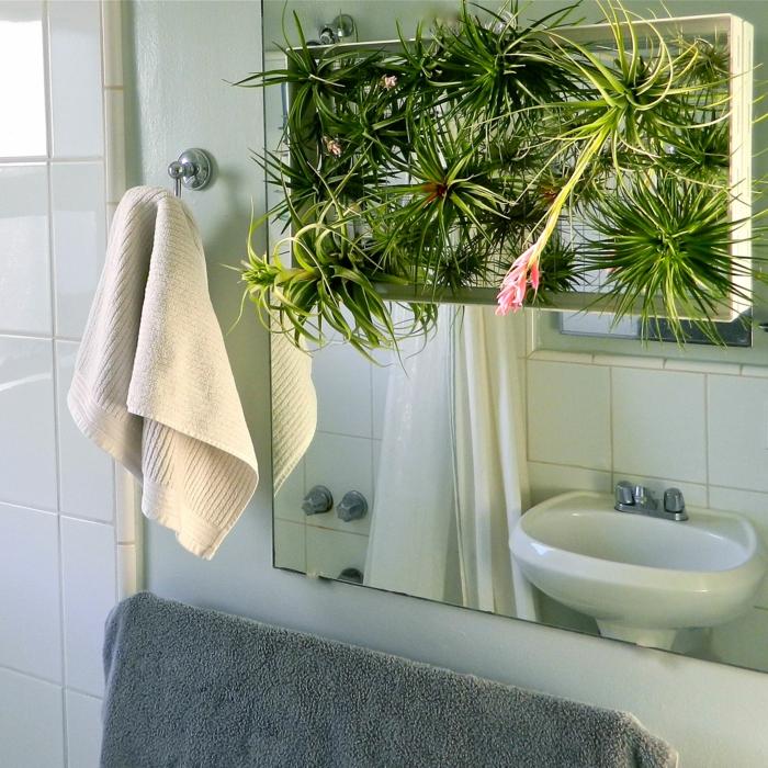 plante pour salle de bain, plante retombante, petit jardin zen au-dessus du lavabo, douche avec rideau blanc, plante interieur ombre