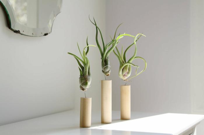 plante qui absorbe l'humidité, trois troncs d'arbre avec trois plantes vertes, miroir en style baroque sans cadre avec des taches de rouille sur les bords