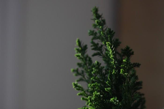 plante miniature pour petit jardin japonais pour décoration d intérieur zen