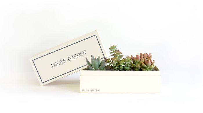 Pratique cadeau emménagement idée cadeau crémaillère housewarming petit jardin dans boite en bois cactus differents