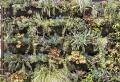Mur végétalisé: l'art du vert pour les espaces extérieurs et intérieurs
