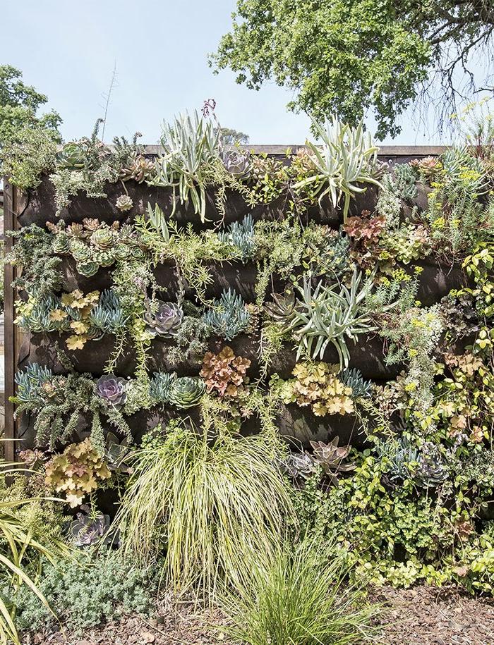 mur vegetal exterieur palette avec des cactus et des plantes exotiques, diversité d'espèces et de couleurs, mur qui continue au sol avec des plantes