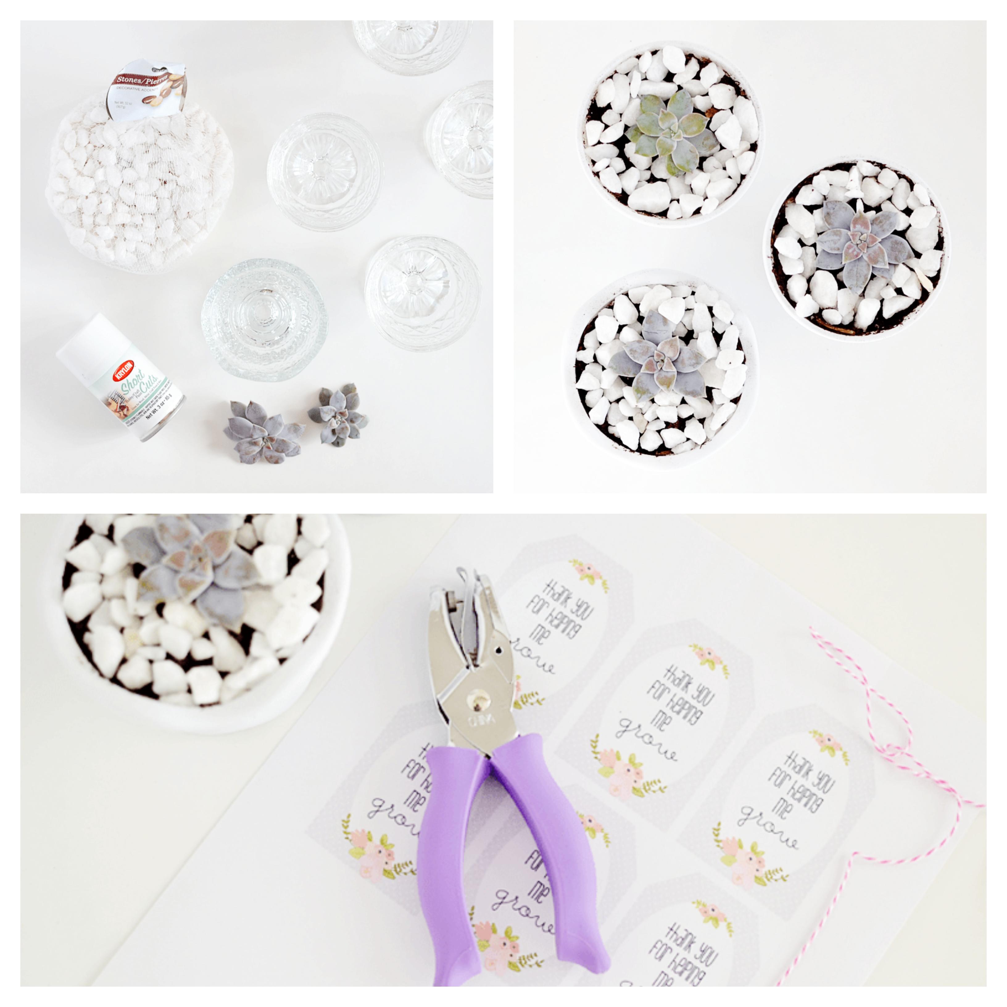 idée de pot de fleurs en verre repeint de peinture blanche avec galets et plante succulente, cadeau pour maitresse a fabriquer