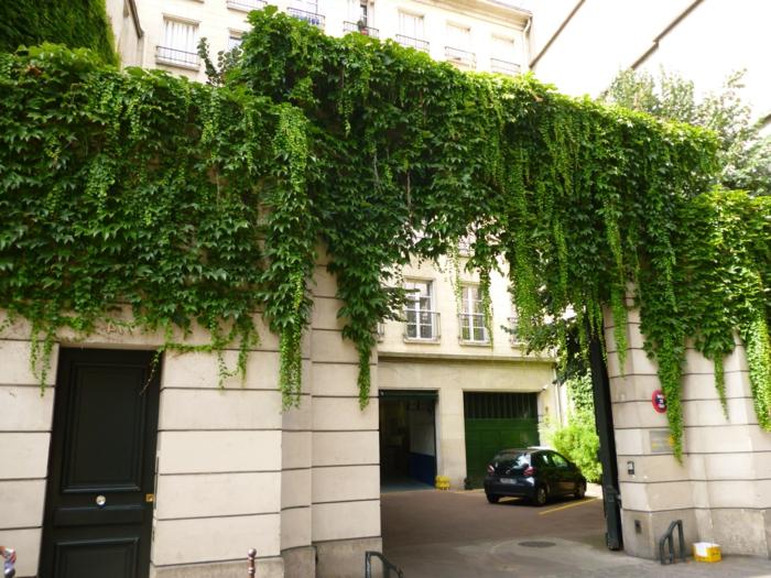 mur vegetal exterieur avec des plantes retombantes, lierre, style d'édifice classique avec des murs en couleur ivoire, grande porte d'entrée pour la cour d'un immeuble parisien
