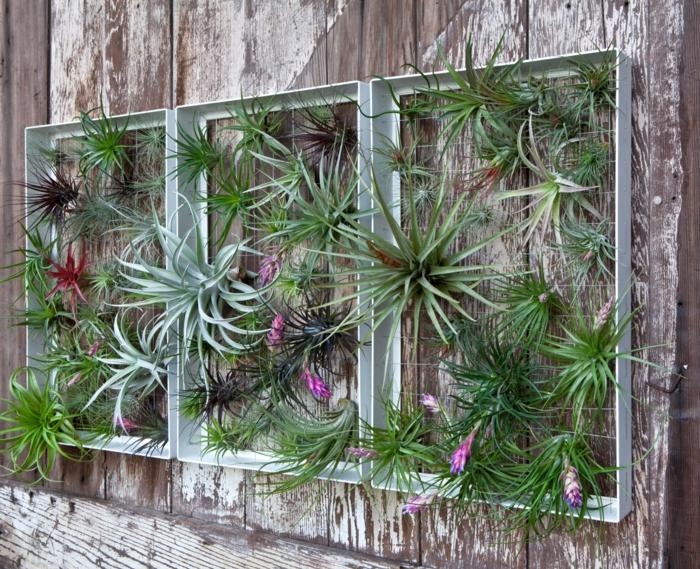 habillage mur exterieur en bois gris et blanc effet vieilli et usé, décoré de trois cadres en métal couleur vert pistache, végétation exotique qui sort des trous dans le bois et orne les cadres