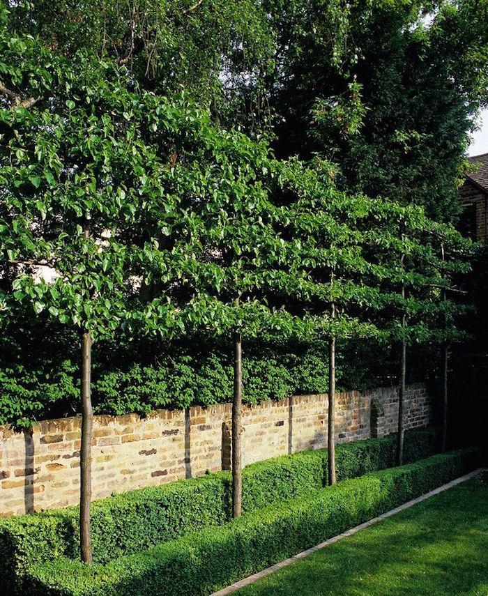 double brise vue avec mur végétal en bas et arbres à feuillages hauts sur la partie supérieur