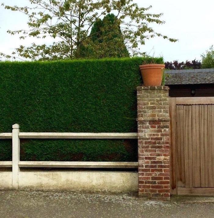haie brise vue croissance rapide occultante bien taillée en angle droit comme mur végétal
