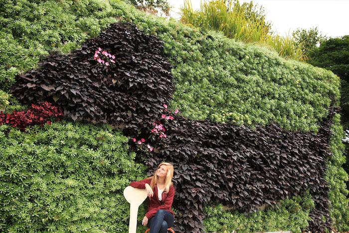 grand mur de jardin couvert de plante grimpante brise vue croissance rapide