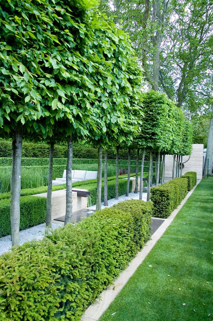 haies végétales taillées et rangée d'arbres comme brise vue feuillage