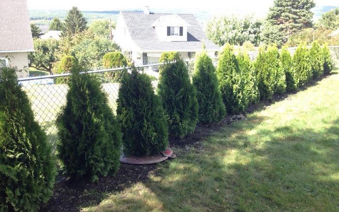 rangée de petits arbustes brise vue pour cacher la vue sur le jardin de façon naturelle