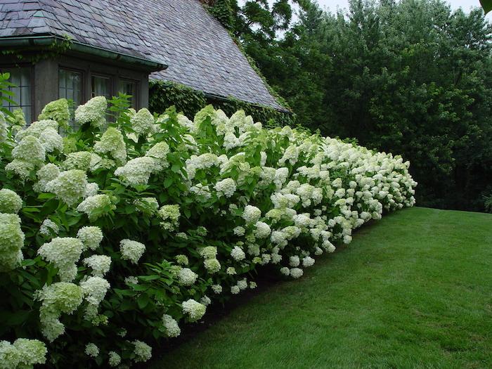 modele de brise vue occultant naturel avec mur de plantes en fleurs le long du jardin