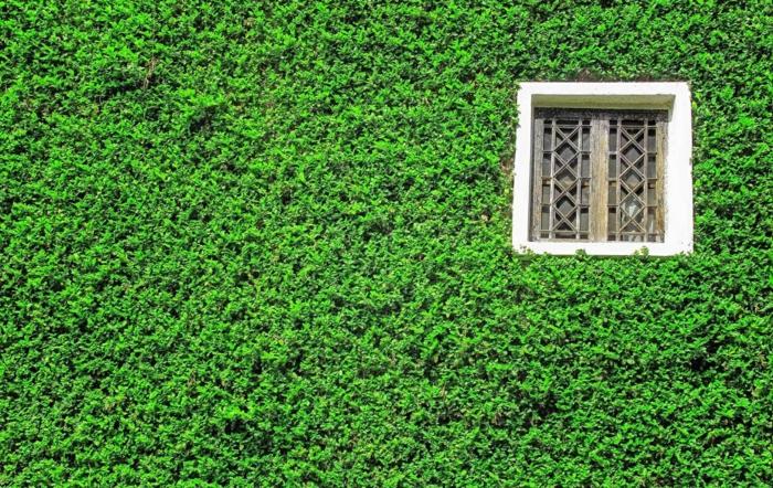 mur végétalisé, petite fenêtre carrée avec des barreaux en style Moyen-age avec un cadre blanc, culture verticale, paysage zen