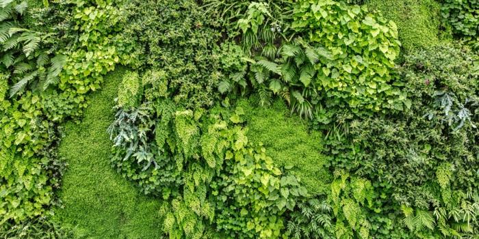 jardin vertical avec plusieurs nuances du vert, motifs géométriques, mur vegetal exterieur, mur végétalisé, cloison végétale