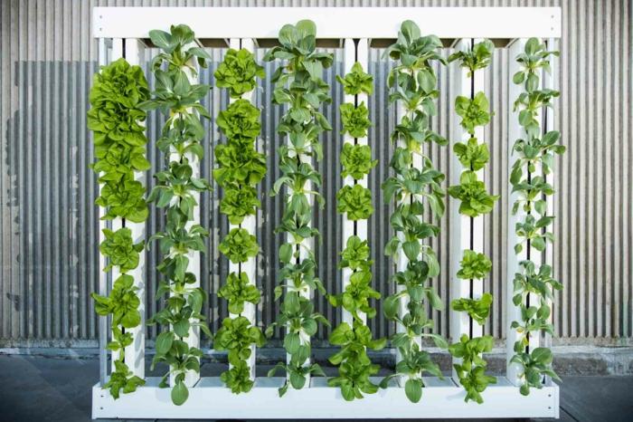 panneau en bois peint en blanc, mur végétalisé, colonnes vertes de plantes rampantes installées sur du fil transparent, mur végétal intérieur