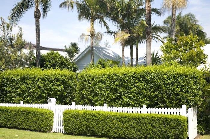 grandes haies pour cacher le jardin de la maison comme mur végétal brise vue