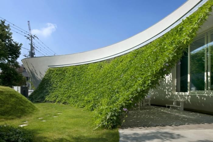 mur vegetal exterieur, cloison végétale, paravent avec des plantes vertes rampantes, installation sur des fils et cordes invisibles