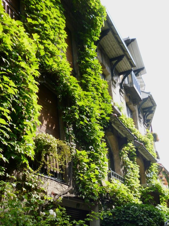 mur vegetal exterieur, jardin vertical, fenêtres entourées par des plantes vertes rampantes, édifice dans un style vieux, toit en noir et blanc