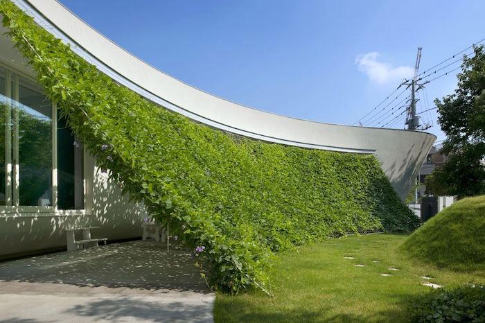 rideaux végétal servant de parasol naturel et brise vue original pour la maison
